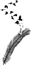 Crows Flying From Long Feather Silhouette On White