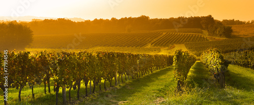Tuinposter Wijngaard Vineyard Sunrise - Bordeaux Vineyard
