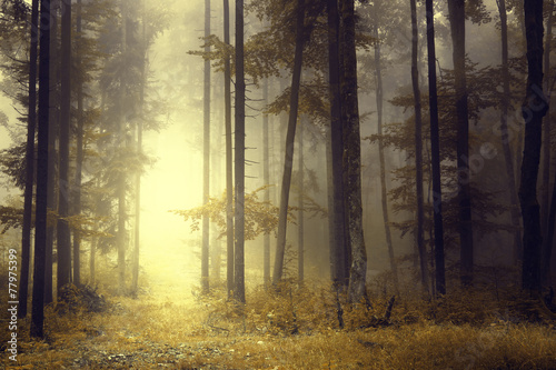 Foto auf Acrylglas Bestsellers Fantasy orange forest light
