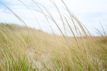 Grass  Blurry Movement On Wind...
