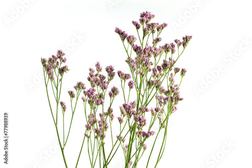 Fotografia  Od kwiaciarni