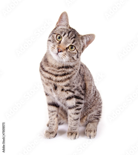 Poster Kat Sitzende, getigerte Katze