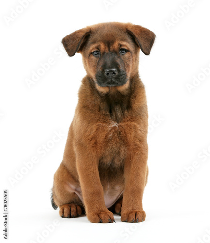 Photographie  Cute puppy isolated on white