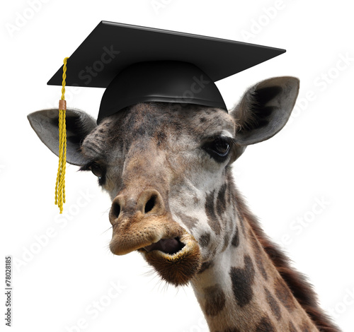 Unusual animal portrait of a goofy giraffe college graduate Wallpaper Mural