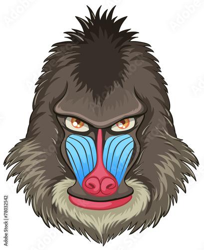 Poster Croquis dessinés à la main des animaux Mandrill baboon