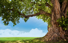 Pring Meadow With Big Tree With Fresh Green Leaves