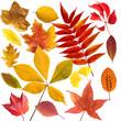 Herbstblaetter; bunt; leuchtend; Blatt; Blaetter;