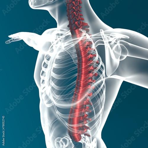 Corpo umano colonna vertebrale anatomia Canvas Print