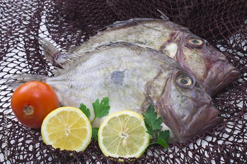 Photo  fresh fish on background