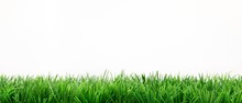 Frische Grüne Wiese
