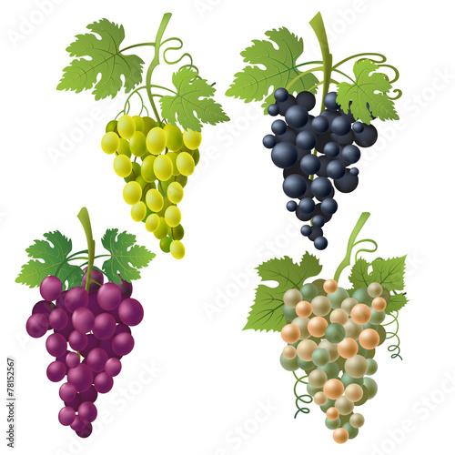 Set of illustrations of different grape varieties Fototapete