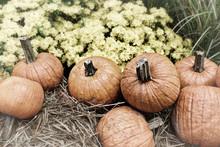 Autumn Outdoor Decor - Pumpkins In Retro