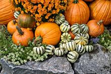 Pumpkin, Squash And Mums