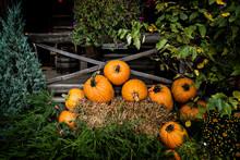 Pumpkin Display - Toned