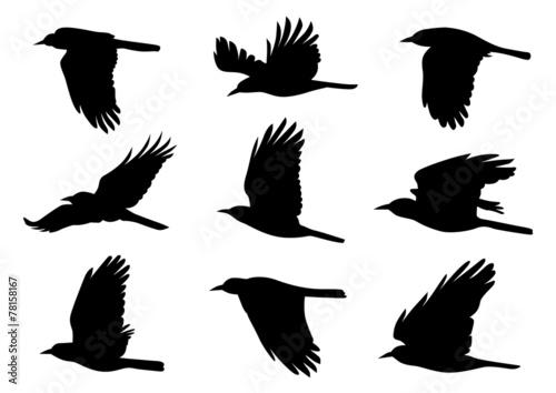 Birds in Flight - 9 Vector Illustrations Wallpaper Mural