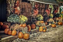 Autumn Pumpkin Theme Display