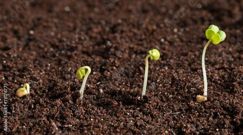 Fotografia  semis de radis