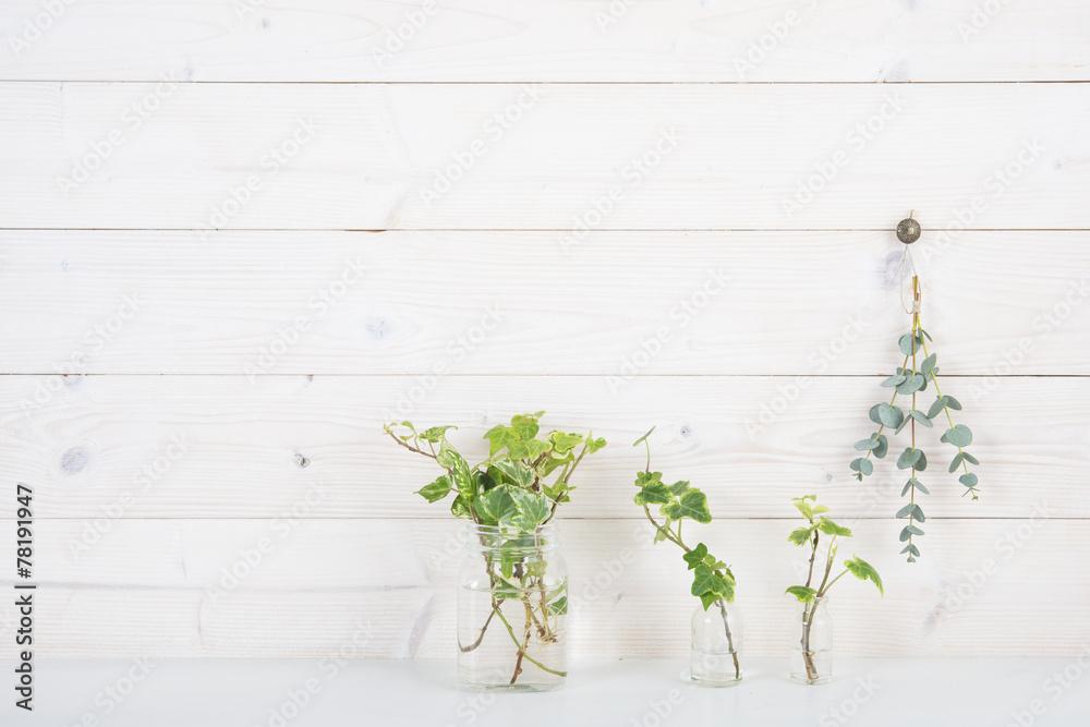 Fototapety, obrazy: 白い壁 植物 アイビー