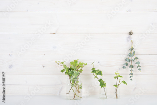 Fotografie, Obraz  白い壁 植物 アイビー