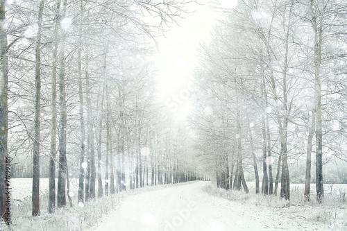 Aluminium Prints Landscapes Snowy winter road in a field