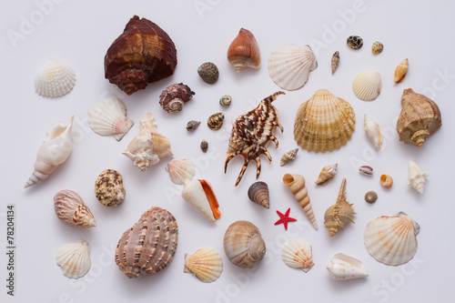 Fotografering  Collection of sea shell