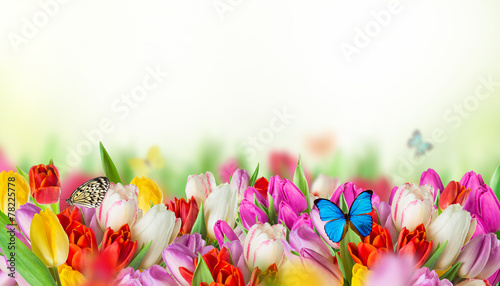 Foto auf Gartenposter Schmetterlinge im Grunge tulips over blurred green background