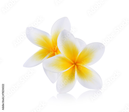 Canvas Prints Plumeria Tropical flowers frangipani (plumeria) isolated on white backgro