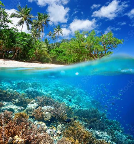 fototapeta na szkło Rafa koralowa w tropikalnym morzu.