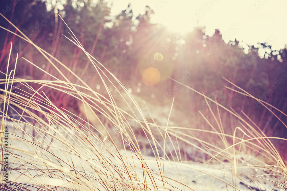 Vintage faded nature background with flare effect.