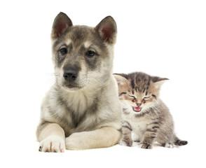 Fototapeta Zwierzęta kitten and puppy