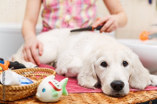 Photo  Girl grooming of his dog at home