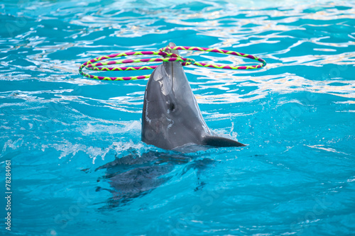 Vászonkép Dolphin playing with rings