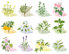 アロマ 植物 いろいろ