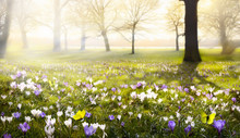 Abstract Sunny Beautiful Sprin...