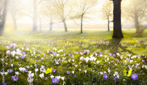 abstract sunny beautiful Spring background Wallpaper Mural