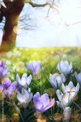 Fototapety, obrazy: abstract sunny beautiful Spring background