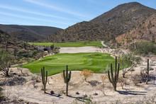 Desert Golf Course Green