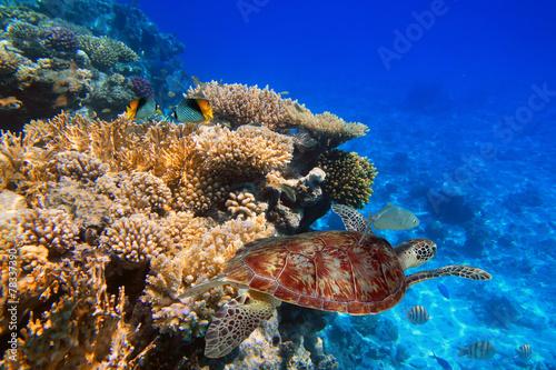 rafa-koralowa-tropikalnej-wody-z-zielonym-zolwia