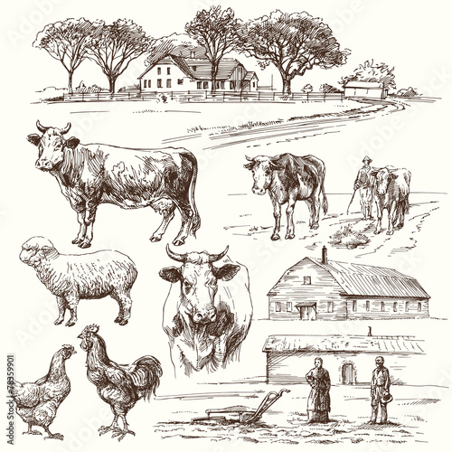 Foto  farm, cow, agriculture - hand drawn collection