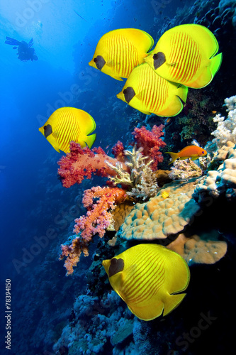 Papiers peints Recifs coralliens Coral reef and Masked Butterfly Fish