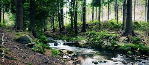 strumień leśny