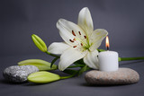 beautiful single white lily with isolated on a gray background