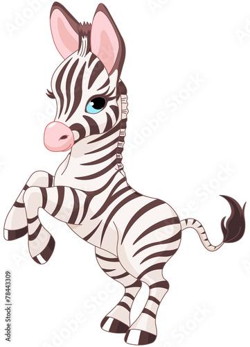 slodka-zebra