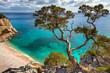 canvas print picture - alter Baum - Sardinien