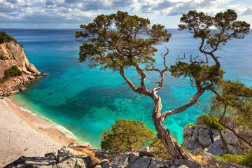Panel Szklanyalter Baum - Sardinien