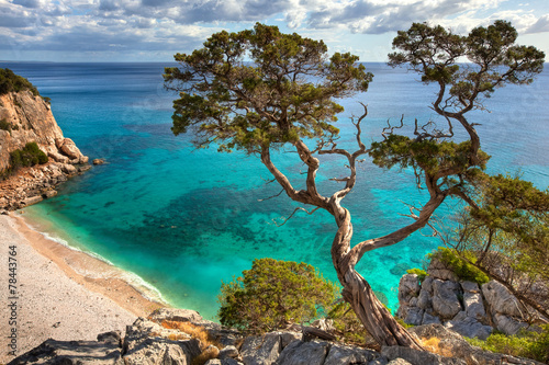 Photo  alter Baum - Sardinien