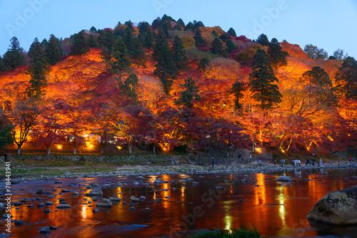 Garden Poster Brown Autumn foliage in Korankei, Aichi, Japan