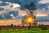 Fototapeta Natura - Sunset in summer field