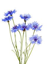 Cornflowers Flowers