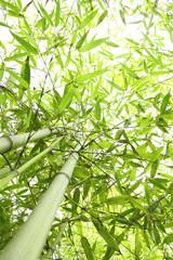 Panel Szklany Bambus Foresta di bambù